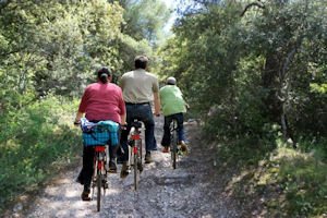 Take a cruise in the Alpilles